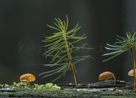 Jungspunde auf Totholz